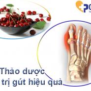 [Bạn có biết] Tác dụng của thảo dược trong điều trị bệnh gút & Chế phẩm AN TOÀN hiện nay?
