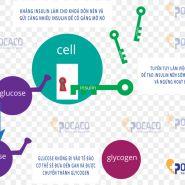 Bạn có biết: Nguyên nhân gây kháng insulin?