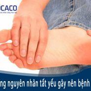 Nguyên nhân của  bệnh Gout - điều trị với chế độ ăn uống & dinh dưỡng