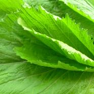 Chữa bệnh gout bằng rau cải giúp phòng & ngăn chặn cơn đau gút