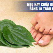 Mẹo hay chữa bệnh gút bằng lá trầu không bạn không nên thử