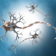 Hiểu nhanh về: Bệnh thần kinh đái tháo đường