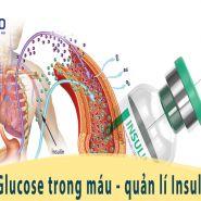 Nồng độ glucose trong máu - Các giá trị quan trọng trong bệnh tiểu đường & quản lý insulin