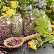 Cách chữa bệnh gút bằng thảo dược, nhờ đâu được đánh giá an toàn?