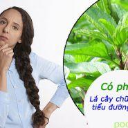 Thuốc lá cây dùng để điều trị bệnh tiểu đường, đưa đường huyết về mức ổn định