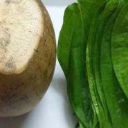 Chữa bệnh gout bằng nước dừa và lá trầu
