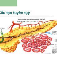 Cách chữa trị bệnh tiểu đường tuýp 2, theo hiện đại hay cổ truyền thì tốt?