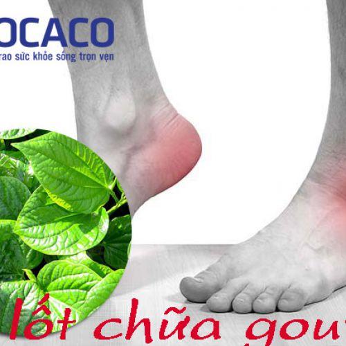 Chữa bệnh gout bằng lá lốt - mang tính phổ cập ở mọi thời đại với kết quả không ngờ